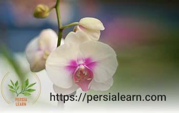 آموزش نگهداری گل ارکیده