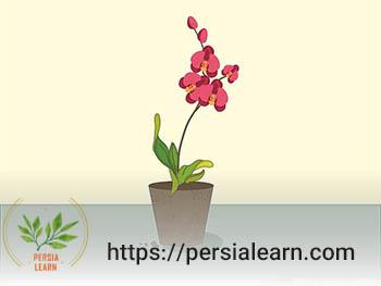 نگهداری گل ارکیده در گلدان