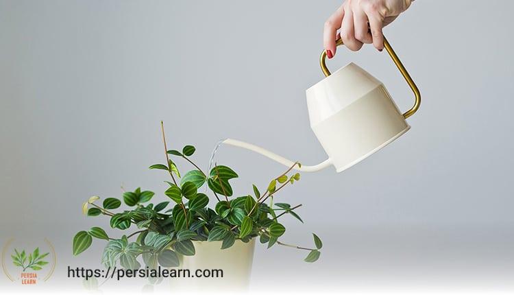 بهترین آب برای گیاهان آپارتمانی