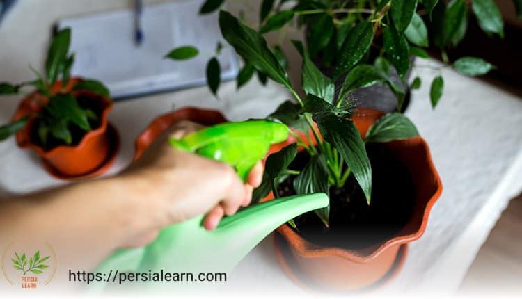 دمای مناسب آب آبیاری گیاهان آپارتمانی