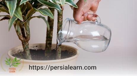 عوامل اثر گذار در میزان آب مورد نیاز گیاهان آپارتمانی