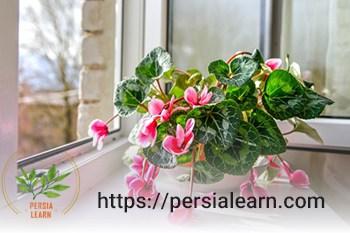 نوسانات دمایی و پژمرده شدن گیاهان آپارتمانی