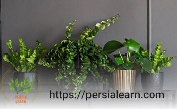 گیاهان آپارتمانی بدون آب چقدر زنده می مانند ؟
