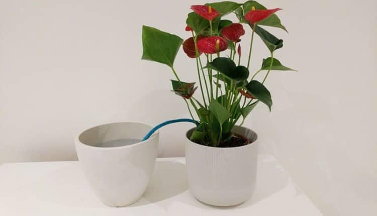 روش فیتیله اولین تکنیک آبیاری گیاهان در مسافرت